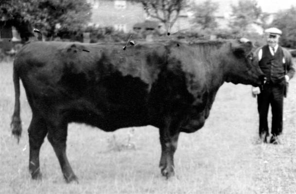 Farmer William Parnham with his bull