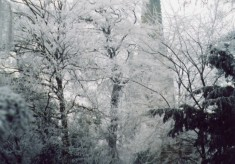 Winter scene - spire through churchyard trees