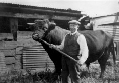 Farmer Parnham with his Lincoln Red bull