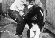 Gerald Rastall with new born calf at Church Farm