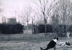 In the gardens at Beckingthorpe Farm