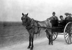 Grandad and Grandma Sellers, pony and trap