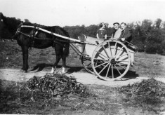 Family in horse and trap