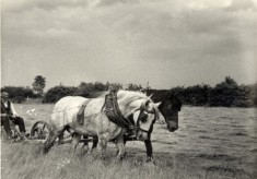 Photographs from the collection of Leslie and Ruby Calcraft