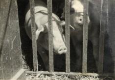 """""""Livestock"""""""