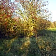 The SINC in Autumn