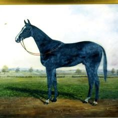 Alec Marsh's horse