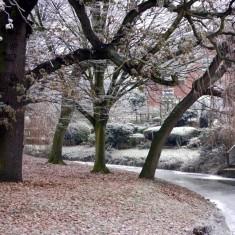 The frozen River Devon