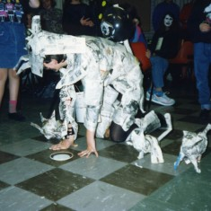 Paper cat competition - various breeds