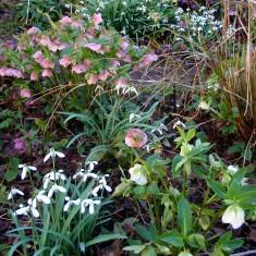 A Rather Special Garden