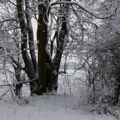 The SINC in Winter