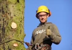 Tree felling on Normanton Lane