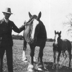 My grandfather Walter Coy with a farm horse and her foal.