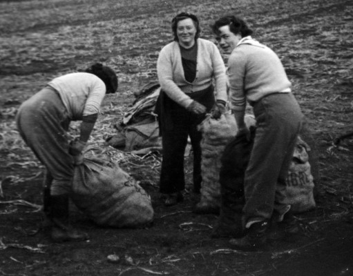 In the fields, three women from Bottesford helping with the potato harvest in 1954, filling and lifting the heavy sacks of the new crop. | From the collection of Mr John Goodson