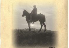 'Forgotten Heroes: Horse in the Great War'