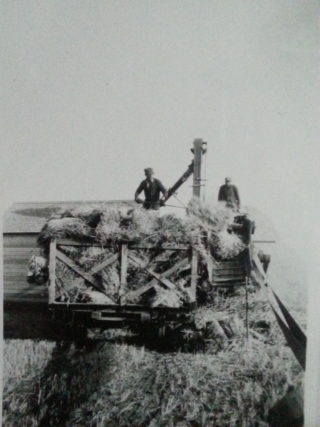 Harold Calcraft threshing near Indian Head | Courtesy of Ms Susan Calcraft