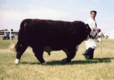 Mr Cooke, displaying pedigree bull