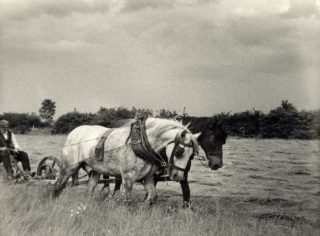 Albert Calcraft cutting grass at Sykes Lane Farm, 1940s. | Bottesford Local History Archive