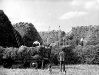 Building hay stacks at Bottesford, 1947. | Bottesford Local History Archive