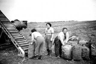 Loading the 8 stone sacks of potatoes on to the conveyor belt, 1954 (L - R: Mrs Wilkinson, Mrs Marriott and Mrs Scotney). | Bottesford Local History Archive