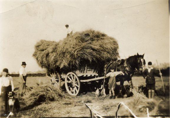 Hay cart at Granby Lane, Plungar