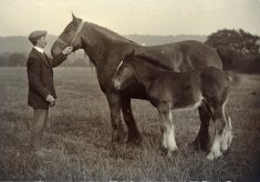 """Lady"" and her foal, Pasture Farm, Plungar"