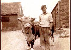 Albert Skelhorn with bull, at Poplar Farm, Plungar