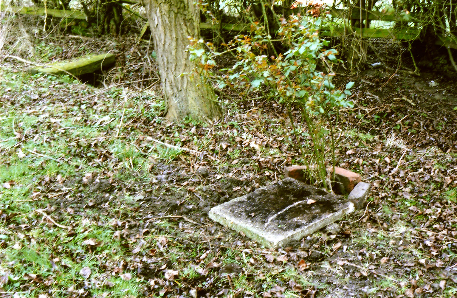 Believed to be the simple grave where Ron Damms' ashes were buried.