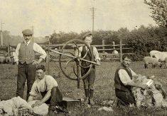 Hand-shearing